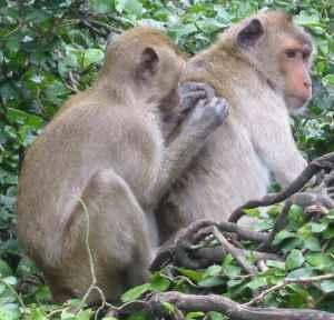 monkey03.jpg
